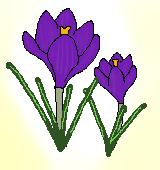 紫のクロッカスのイラスト