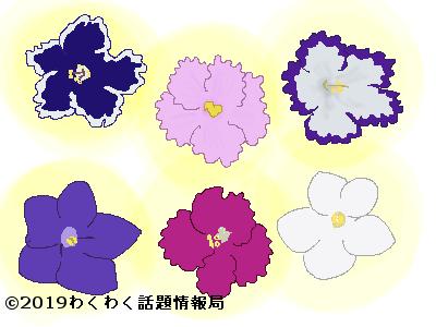 セントポーリアいろいろな花のイラスト