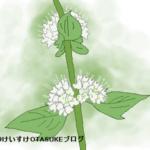 ミントの花言葉を詳しく解説!清涼感あふれる花のメッセージとは?