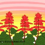 サルビアの花言葉を詳しく解説!燃えるような花が持つメッセージとは