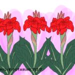 カンナの花言葉!花の姿や色に由来するメッセージを詳しく解説