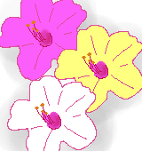 色とりどりのオシロイバナのイラスト