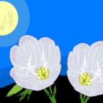 月見草の花言葉を詳しく!人知れず咲く花の片思いのメッセージとは