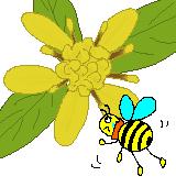 アキノキリンソウと蜂のイラスト