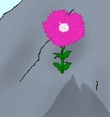 岩に咲くセキチクのイラスト