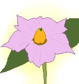 ジャガイモの花のイラスト