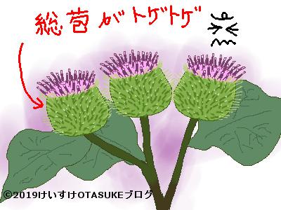 ゴボウの花のイラスト