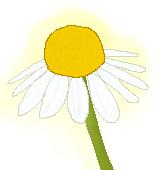 カモミール花芯のイラスト