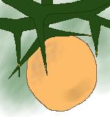 カラタチの果実のイラスト