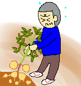 ジャガイモを収穫するイラスト