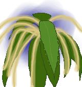 クリの花のイラスト
