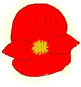 赤いベゴニアのイラスト