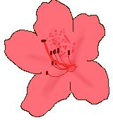 赤いツツジのイラスト