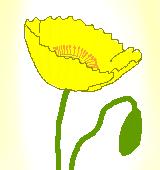 黄色いポピーのイラスト