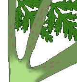 ドクニンジンの見分け方のイラスト