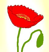赤いポピーのイラスト