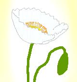 白いポピーのイラスト