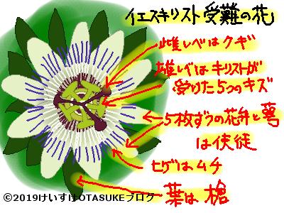 イエスキリストの花の解説イラスト
