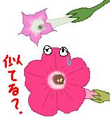 ペチュニアとタバコの花のイラスト