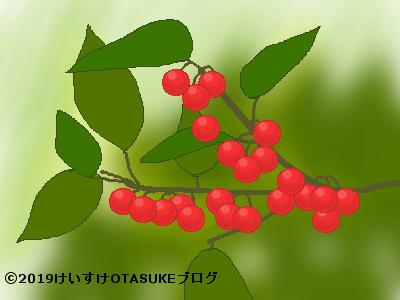 ウメモドキ果実のイラスト