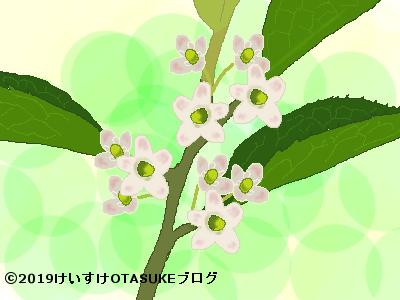 ウメモドキ花のイラスト