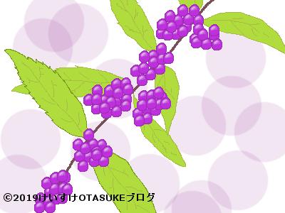 ムラサキシキブ果実のイラスト