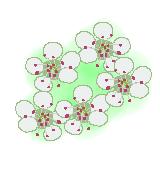 コトネアスター花のイラスト