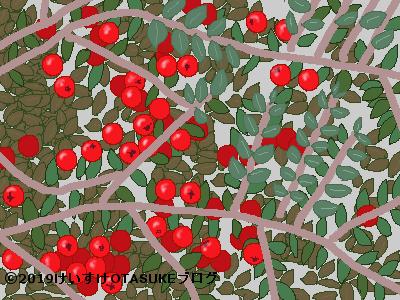 コトネアスター果実のイラスト