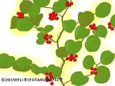 サルトリイバラ果実のイラスト