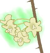 サルトリイバラ花のイラスト
