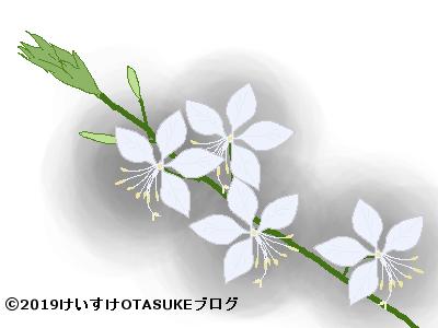 ガウラのイラスト