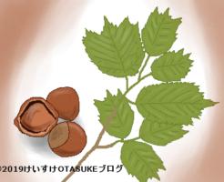 ハシバミのイラスト