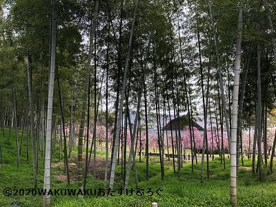 竹林のイラスト
