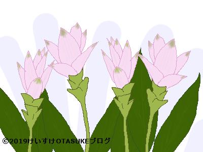 クルクマのイラスト