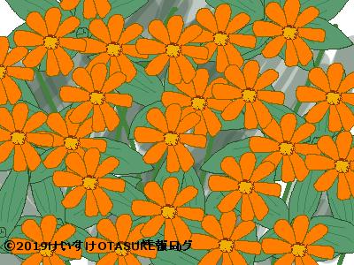 オレンジ色の花言葉