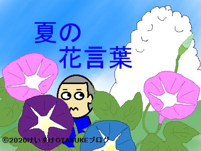 夏の花言葉のイラスト