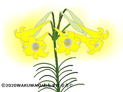 黄色いユリのイラスト