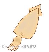 スルメのイラスト