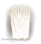 エノキダケのイラスト