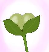 イヌノフグリの種子のイラスト