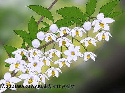 エゴノキのイラスト