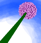 アリウムギガンチウム花茎のイラスト