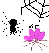 蜘蛛とクレオメのイラスト