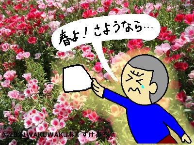 ゴデチア花言葉の由来イラスト
