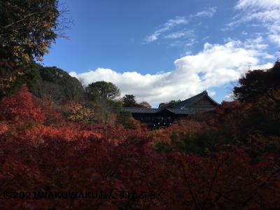 東福寺の紅葉の写真